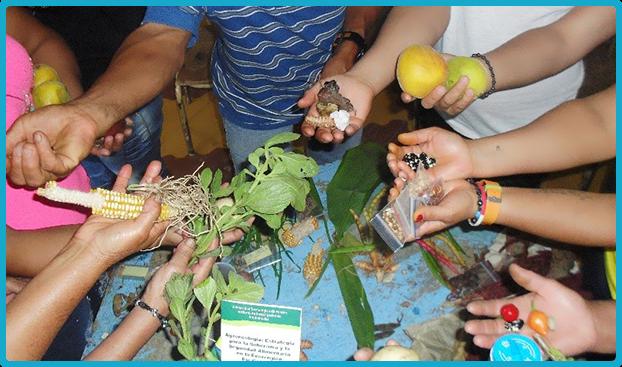 Fundación Frisby alimentos de calidad